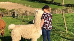 Rachel feeding alpaca